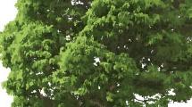 Árbol frondoso