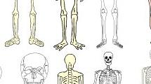 Cráneos y esqueletos