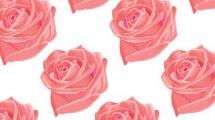 Rosas realistas