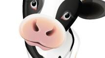 Animales de granja: vaca