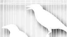 Jaula con pájaros