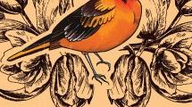 Fondo vintage con pájaro