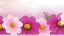 Set con banners florales
