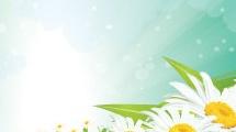 Primavera con margaritas
