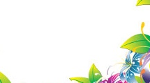 Borde con lirios multicolores