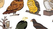 Aves salvajes
