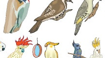 Set con aves
