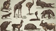 Animales salvajes vintage