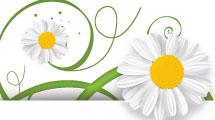 Banner de margaritas