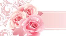 Banners y marcos con rosas