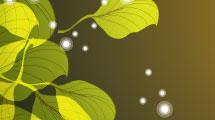 Borde hojas verdes
