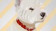 Cachorro blanco con pelota