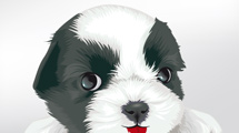 Cachorro blanco y negro