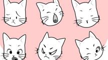 Caritas de gato