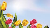 Cielo con tulipanes