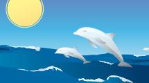 Delfines Saltando