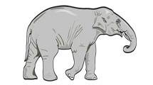 Dibujo vectorial de un elefante