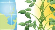 Ecología mundial