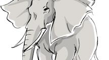 Elefante dibujado