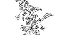 Flores a Mano 2
