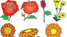 Flores a puro color
