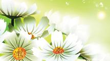 Flores blancas con destellos