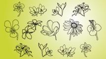 Flores lineales sobre verde claro