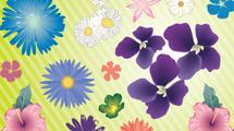 Flores llenas de colores