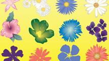 Flores variadas de nueve especies