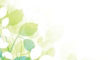Fondo floreado verde