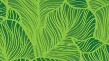 Fondo verde jungla