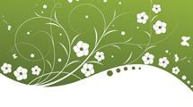 Fondo verde y blanco