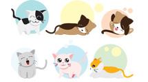 Gatitos simpáticos
