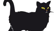 Gato negro sospechoso