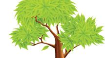 Gran árbol de verdes hojas