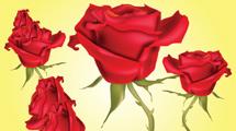 Grupo de rosas rojas realistas