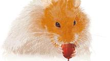 Hamster bebiendo