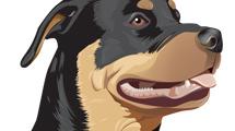 Hermoso rottweiler