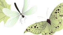 Insectos verdes