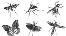 Insectos y mariposas