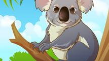 Koala en rama de árbol