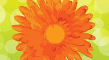 Margarita naranja pintada