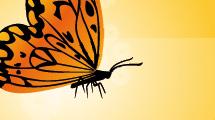 Mariposa en naranja y negro