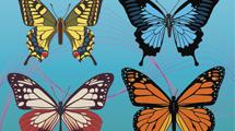 Mariposas de colores sobre fondo celeste