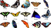 Mariposas de varias especies
