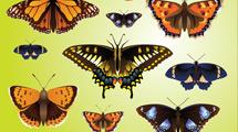 Mariposas reales