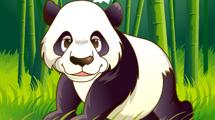 Panda de frente