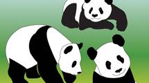 Pandas paseando