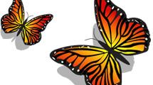 Par de mariposas