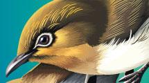 Pájaros realistas